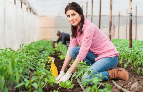 Agriculture Scholarships for International Students
