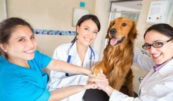 Best Veterinary Schools in the World
