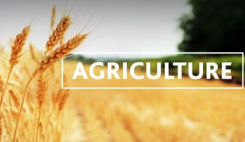 Top Agriculture Colleges to Study in the USA