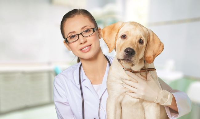 Top Veterinary Schools in the United States
