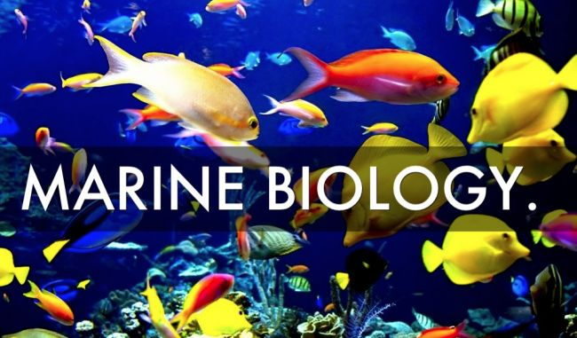 Best Marine Biology Colleges | 2018 2019 HelpToStudy.com