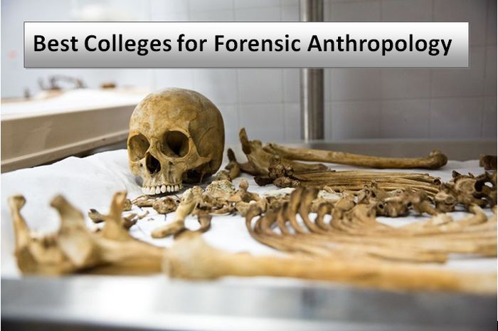 Best Colleges For Forensic Anthropology 2020 Helptostudy Com 2021
