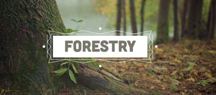 Best Colleges for Forestry
