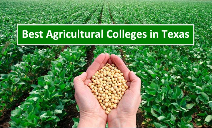 Best Agricultural Colleges in Texas 2018-19