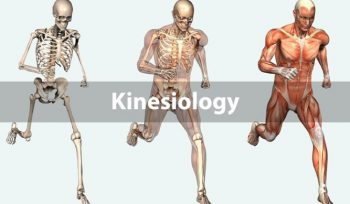 Best Colleges for Kinesiology in California