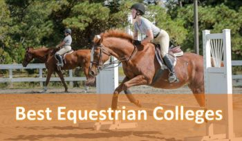 Best Equestrian Colleges in the United States